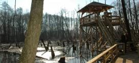 A tatai lápvidék és egy kellemes ebéd az Öreg-tó partján