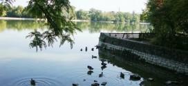Magyarországon az 5 eldugott, romantikus tó közül az egyik Tata városában van.